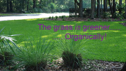 Organic Fertilizers for lawns