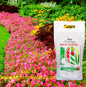 Organic Worm Castings For Sale