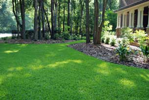 Fertilize the lawn organically
